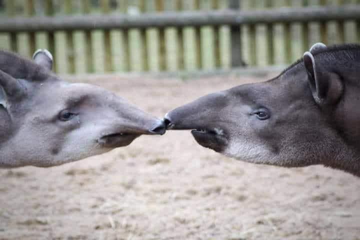 How Animals Think! Vol. 2