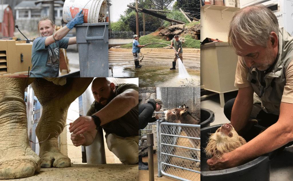 Top 10 Zookeeper Qualities!