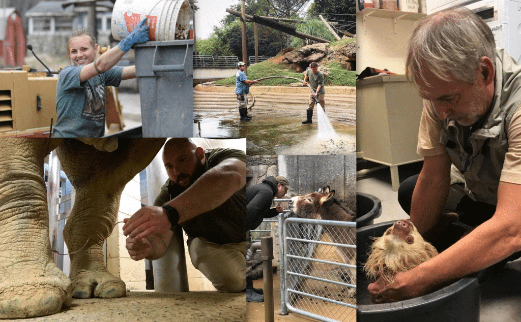 Top 10 Zookeeper Qualities!