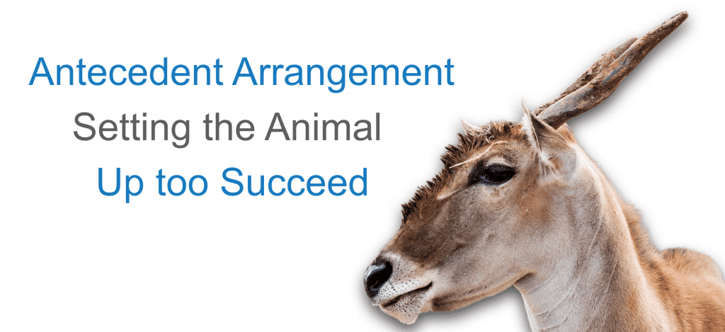 Success Starts With Observation; Antecedent Arrangement