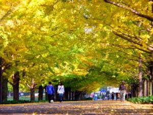 紅葉-01国営昭和記念公園