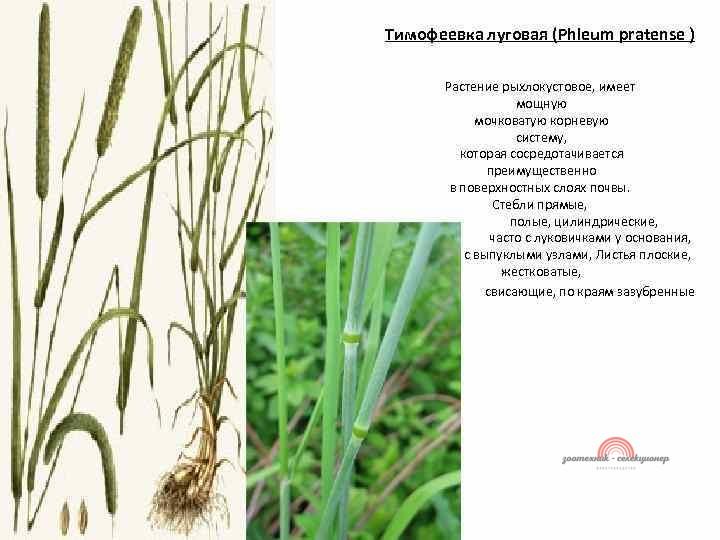 группы классификации растений