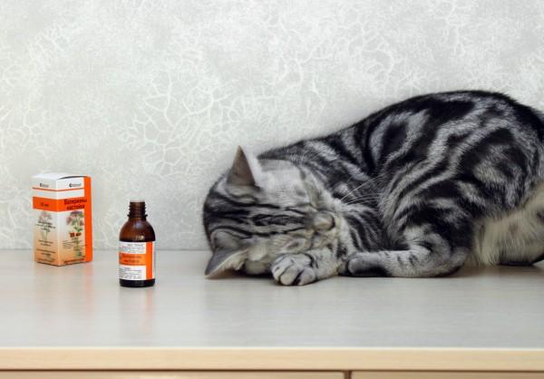 چرا گربه عاشق سنبل الطیب است