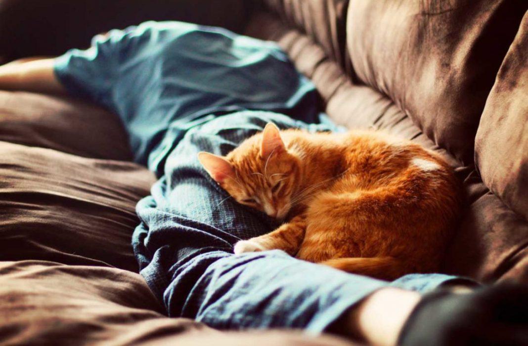 Почему кошки трутся о ноги и предметы? Почему кошки трутся об ноги? Почему кошка трется о ноги хозяина