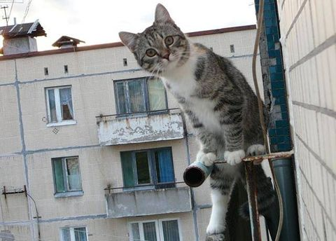 Сотрясение мозга кота что делать. Есть подозрение на сотрясение мозга у кошки: признаки заболевания и методы лечения