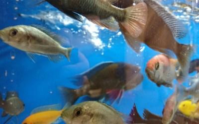 Beställningslista akvariefiskar