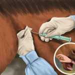 donde se debe inyectar un caballo