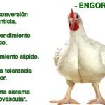 Crecimiento del pollo de engorde