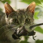los gatos llevan animales muertos a casa