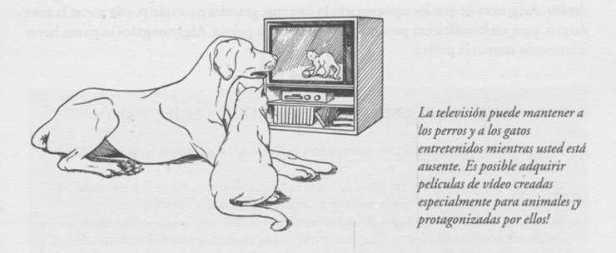 aburrimiento en perros