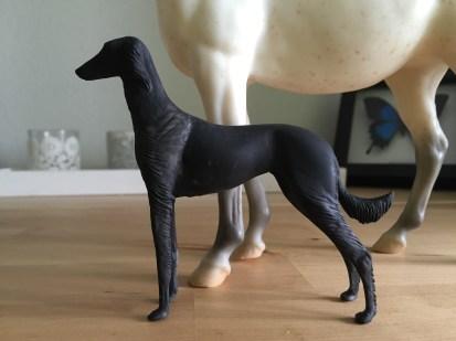 saluki-dog_001
