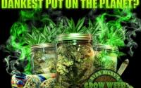 Growing_Elite_Marijuana_Review