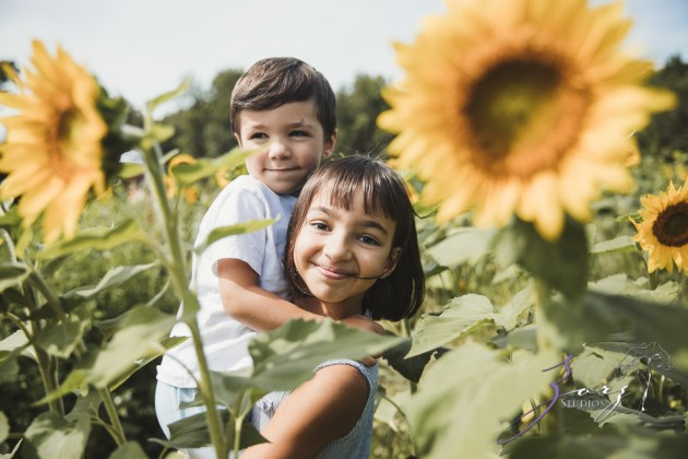 Field Trap: Sunflower Field Photoshoot for Three Families by Zorz Studios (34)