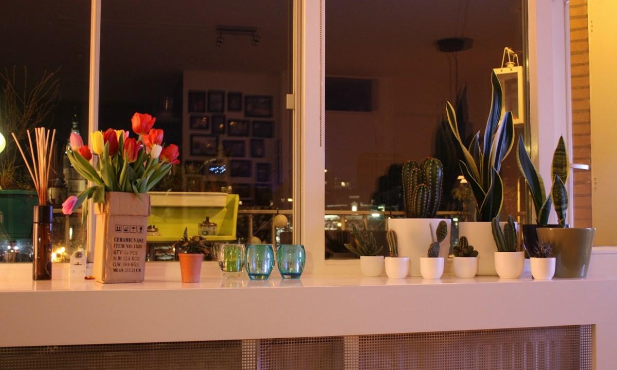 planten in vensterbank