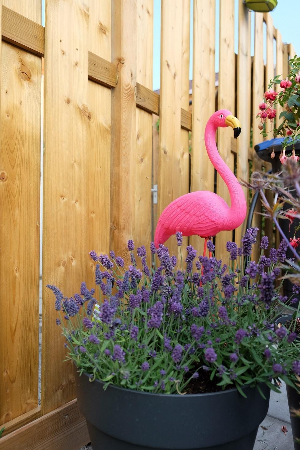 tuin flamingo