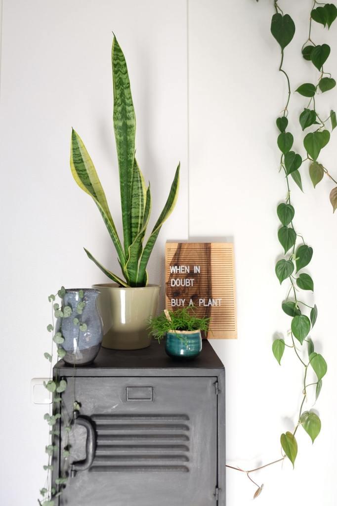 plantenliefhebber cadeautips