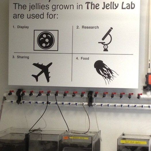 ing - the jelly lab