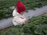 一起出去走一走–台南縣採草莓