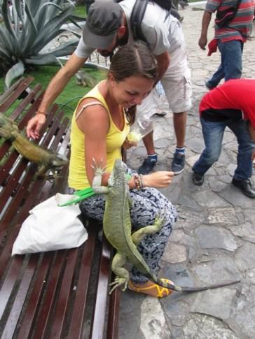 Guayaquil iguany (6)