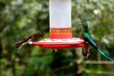 valle-de-cocora-kolibry