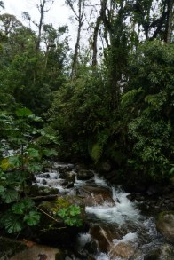 Panama Los Quetzales