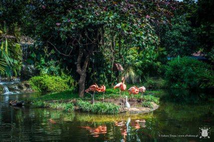 zoo - flamingi