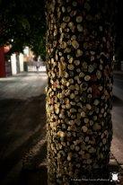 """""""Gumowe"""" drzewo"""