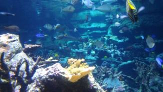 Morskie muzeum #1