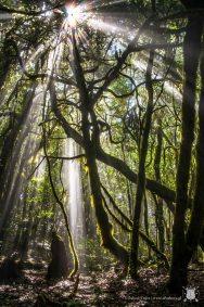 Park Narodowy Garajonay - La Gomera