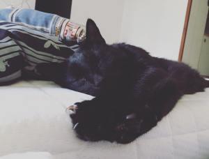 Fotografie spícího černého kocourka na matraci.