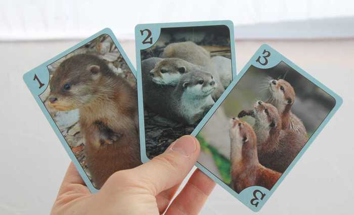 otters_cards