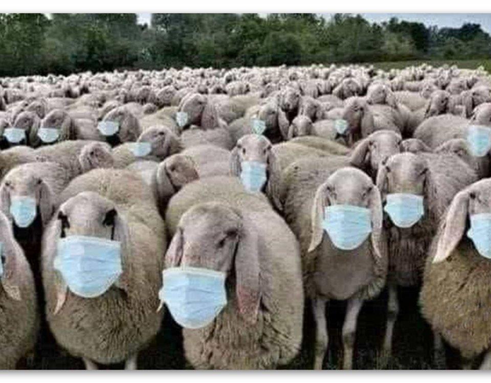 Пандемия – начало Нового мирового порядка | Блог З.С.В. Свобода слова