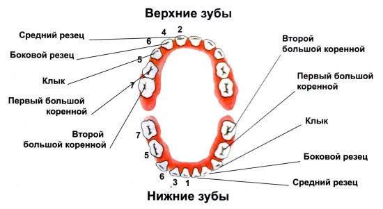 kenőcs az orrfájdalom fájdalmáért csavarok ízületek