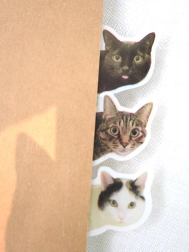 cat_tag2