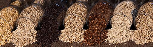 Zuckerfrei Online Shop, Low Carb Körner und Saaten. Körner und Saaten kaufen. Körner und Saaten Online Shop. Low Carb und zuckerfreie Lebensmittel online kaufen.