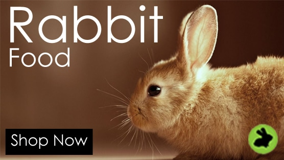 rabbit - Club De Nuit in