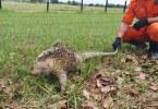 Animais Silvestres Corpo de Bombeiros | Foto: ASCOM CBMRR