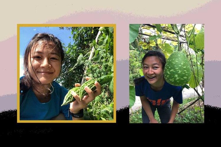 kimberly hoong urban farming
