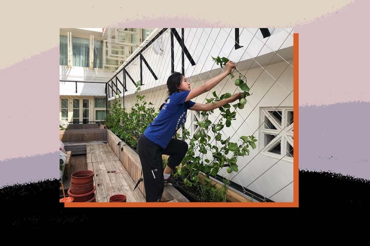kimberly hoong urban farming 1