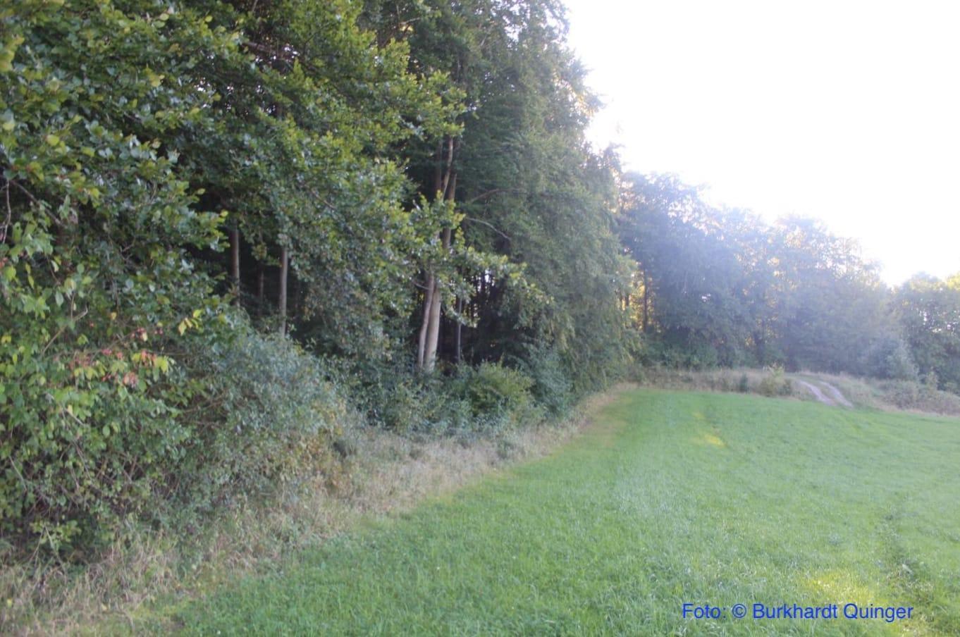 Kuckuckswald-2020-07-29
