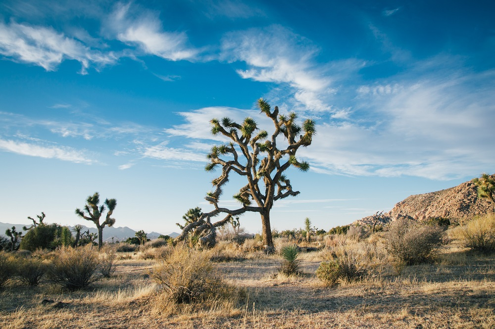 Check Out Guided Tours of Kingman, Arizona