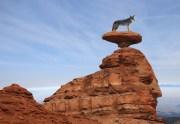Arizona Wildlife | Arizona Game and Fish | Zuni Village RV Park