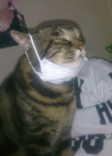 猫アレルギーの症状って?対策とかアレルギーでも猫は飼えるのか?
