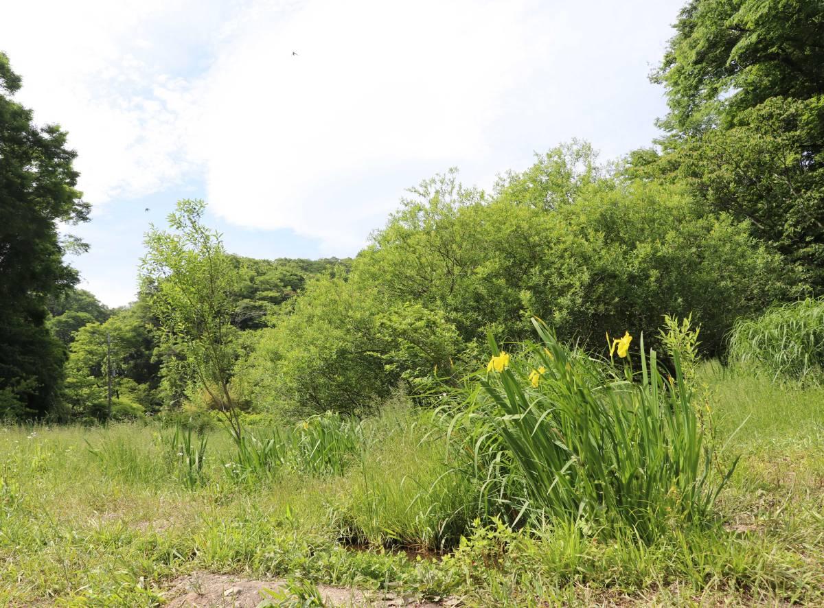 逗子に残る遠い昔の原風景、「名越緑地」で自然の安らぎを味わおう