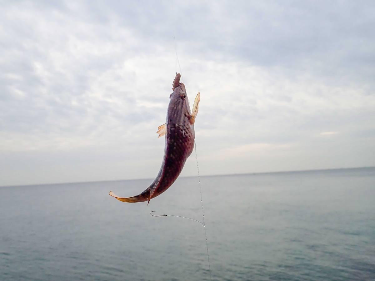 逗子で唯一の漁港、小坪漁港で釣りをしてきた③