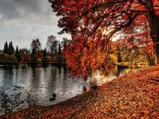 Filmowa jesień: filmy z jesienią w tle