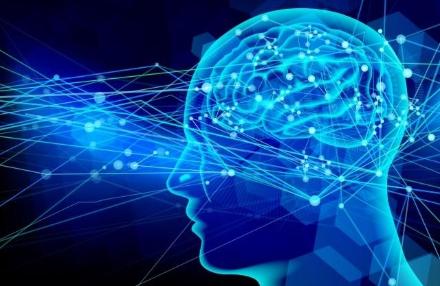 脳科学による解明