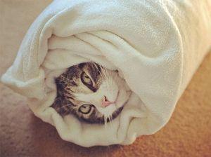 Как давать таблетки от глистов коту. Глистогонное для кошек: симптомы, последствия и способы лечения