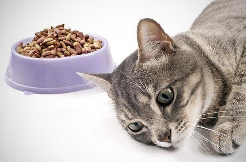 Выделения у беременной кошки. Как распознать опасность. Что означают кровяные выделения у беременной кошки