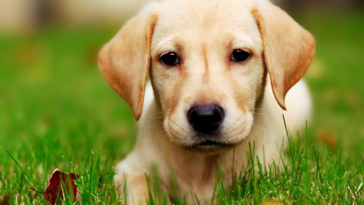 מדריך לגידול גור כלבים חדש